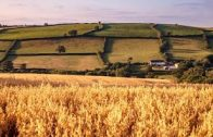 Sky-News-190120-New-UK-Agriculture-Bill-to-move-away-from-old-inefficient-and-overly-bureaucratic-CA